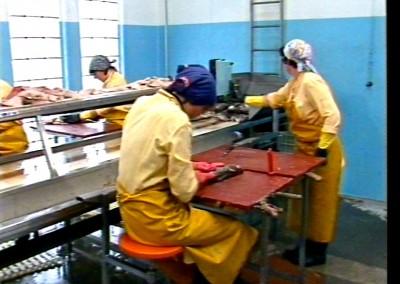 Les travailleuses de la mer